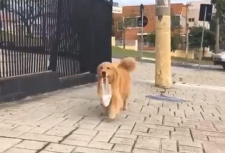 Vídeo de cachorra indo buscar pão sozinha viraliza na internet