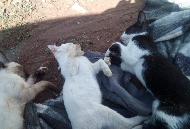 Gatos são envenenados no Cruzeiro do Sul