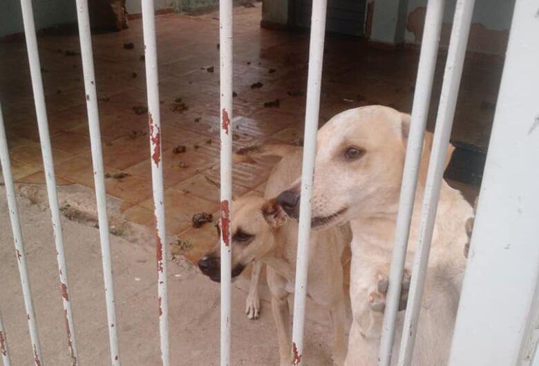 Inquilinos vão embora e abandonam três cães, afirma proprietária da casa