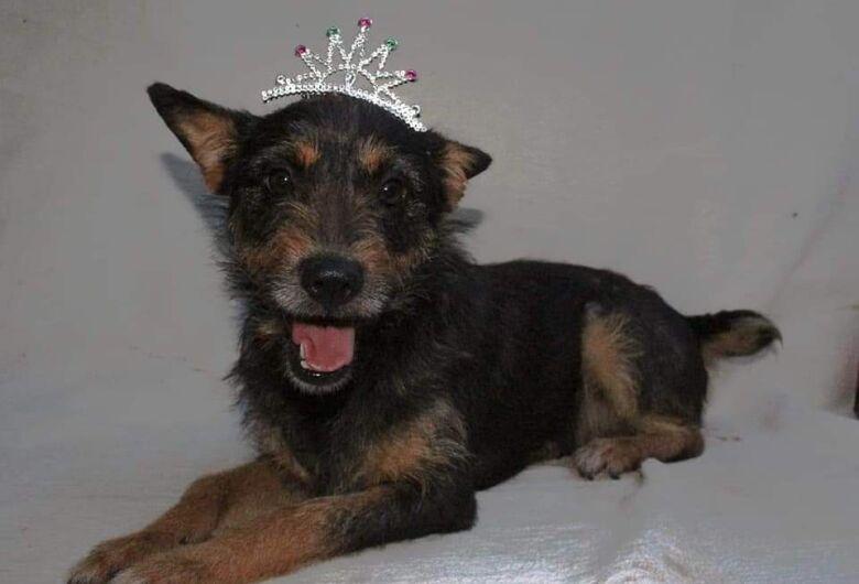 Feira de adoção de animais acontece durante o 3º Pet Day