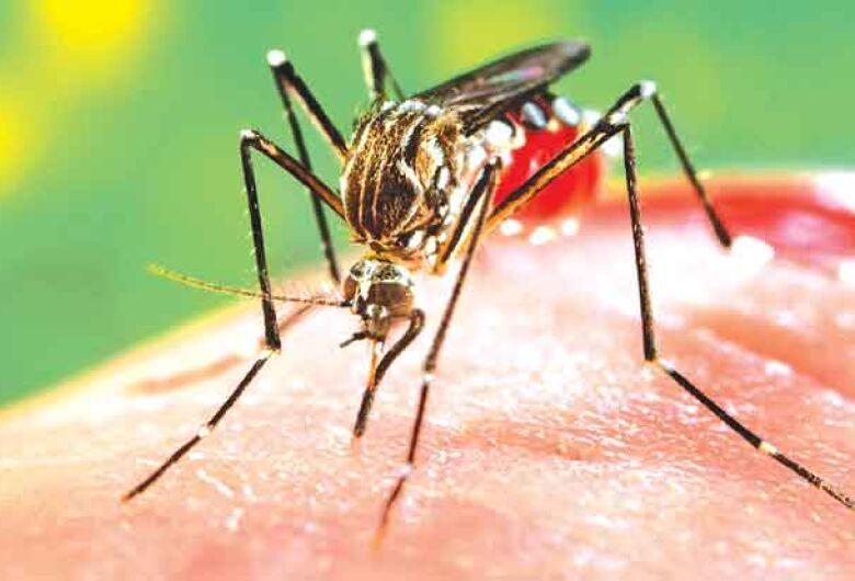 Epidemia: Araraquara registra 906 casos de Dengue neste ano