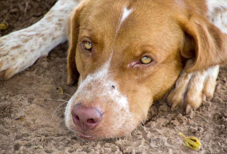 Sábado tem campanha de doação de ração em prol dos animais abandonados