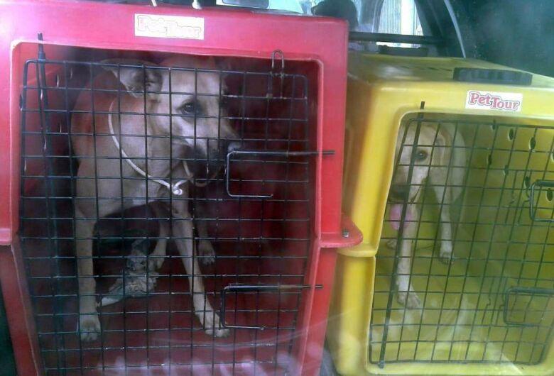 Cães que foram abandonados por antigos inquilinos são resgatados no Aracy