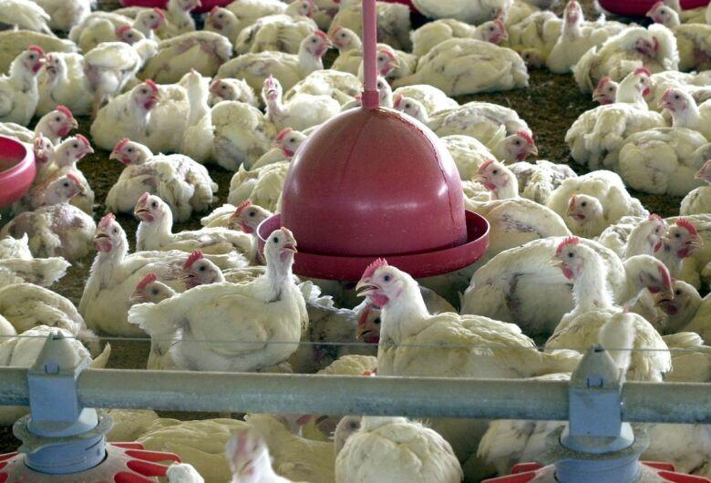 BRF recolhe carne de frango por risco de contaminação por salmonella