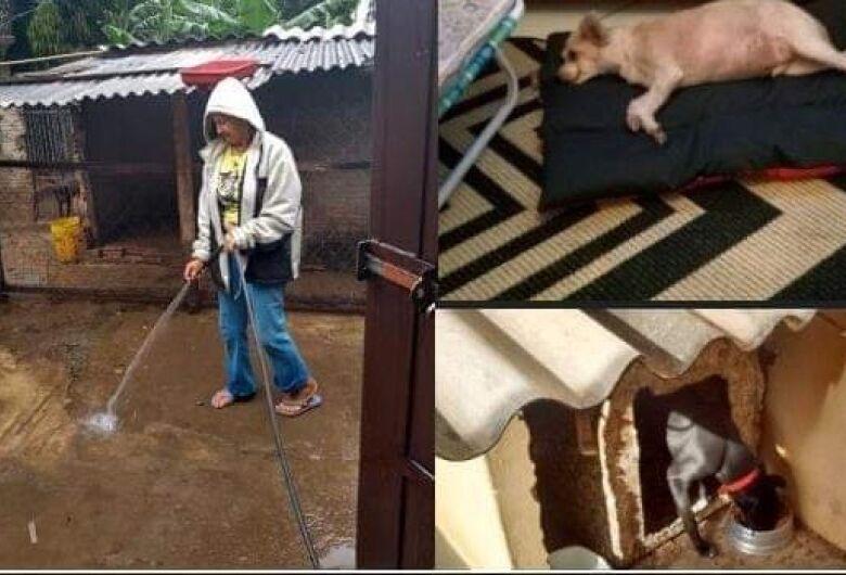 Mulher que cuida de 50 cães e 20 gatos precisa de ajuda