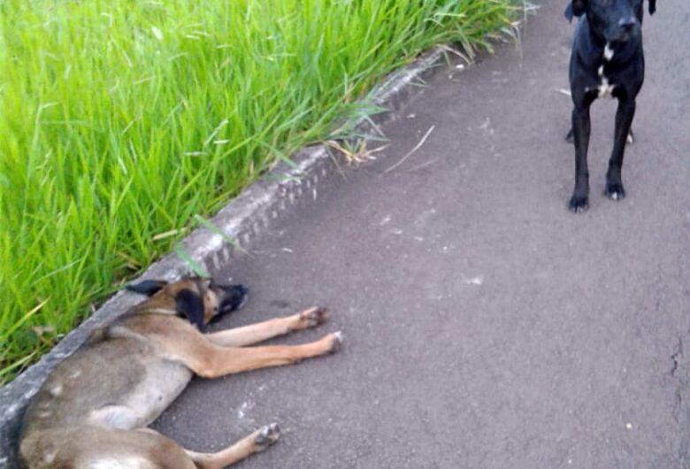 Cão é atropelado e sem abandonar, companheiro fica ao lado