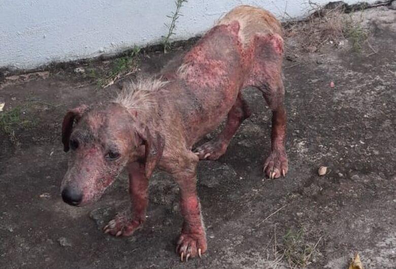 Cãozinho abandonado precisa de ajuda no Antenor Garcia