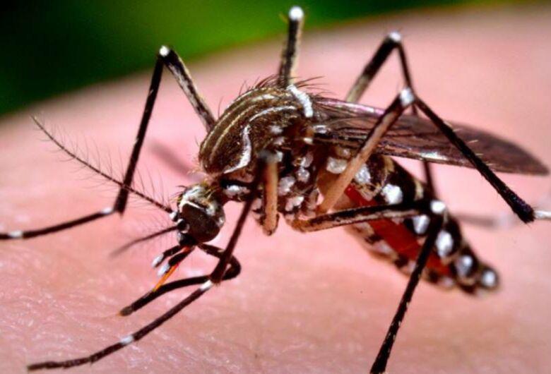 Com 4.771 casos confirmados, Araraquara registra 5ª morte por dengue