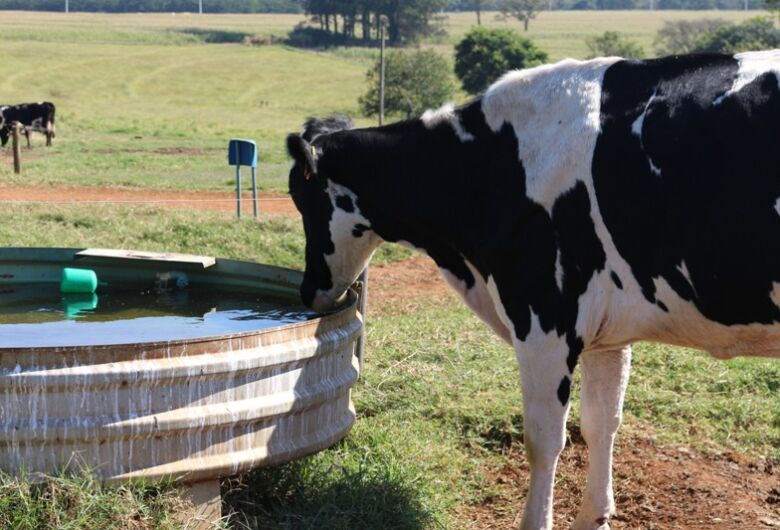 Estudo da Embrapa São Carlos propõe protocolo para definição de padrão da água para pecuária