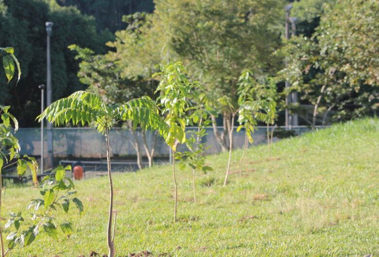 UFSCar realiza levantamento, manejo e plantio de árvores no campus sede