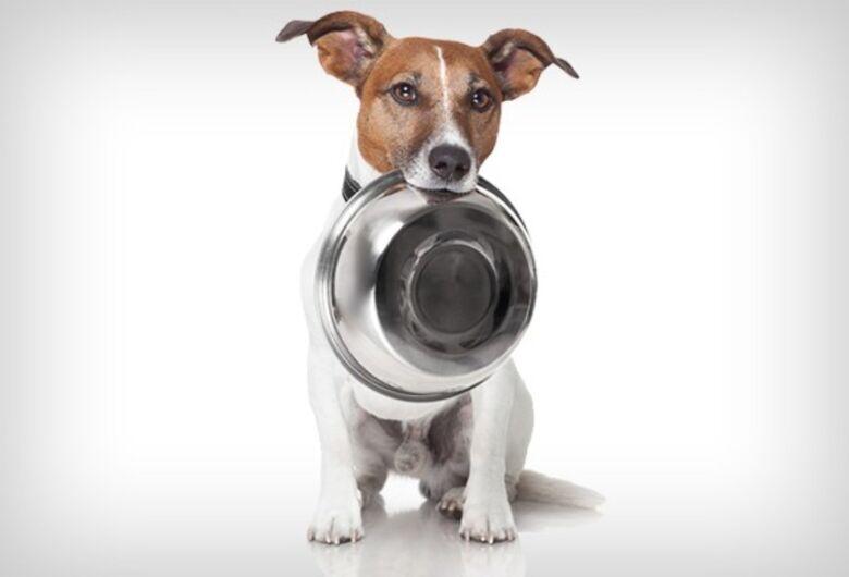 Campanha solidária irá arrecadar ração para cães e gatos abandonados em São Carlos