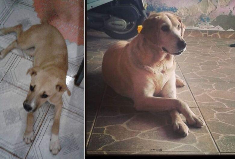 Homenagem Funerais Pet às cachorrinhas Cindy e Laira