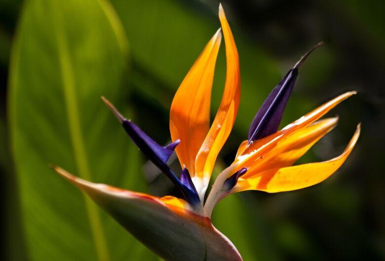 Abertura da 57ª Exposição Nacional de Orquídeas será nesta sexta-feira na Praça da XV