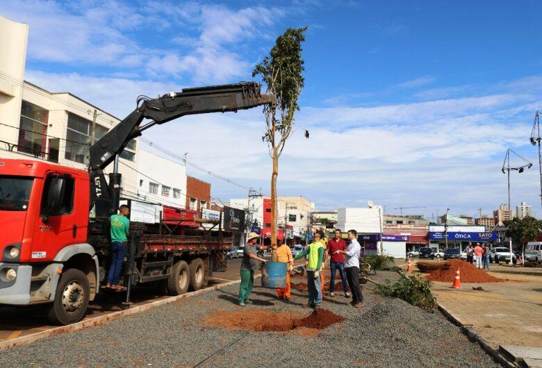 Prefeitura realiza plantio de 10 árvores nativas na Praça do Mercado Municipal