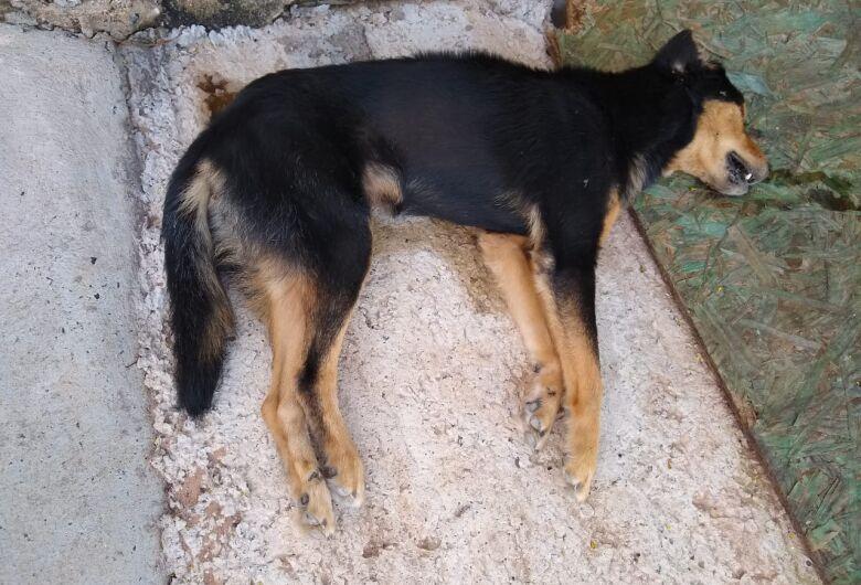 Mais um cachorro é envenenado no Jardim Zavaglia