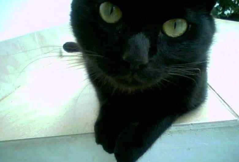 Dona oferece R$ 2 mil de recompensa para quem encontrar gatinho