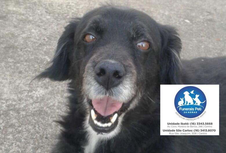 Homenagem do Funerais Pet ao cachorro Duque