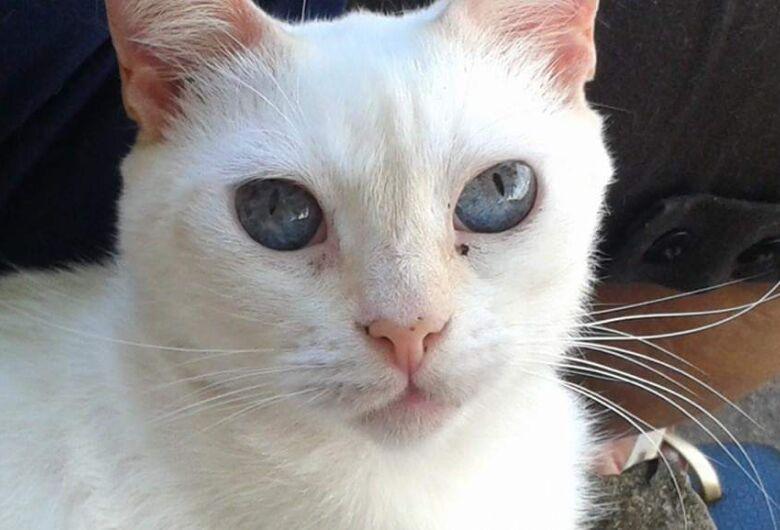 Homenagem a gatinha Lisa Maria