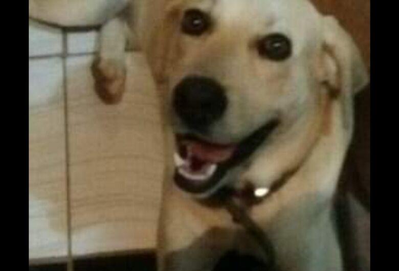 Homenagem a cachorro Marley