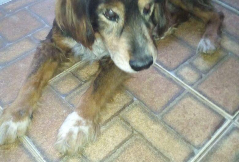 Homenagem ao cachorro Tobi.