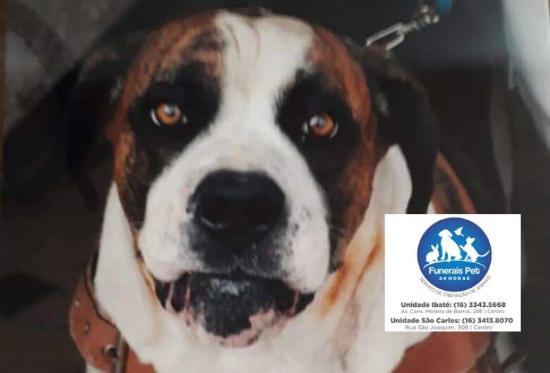 Homenagem da Funerais Pet ao cachorro Brusk
