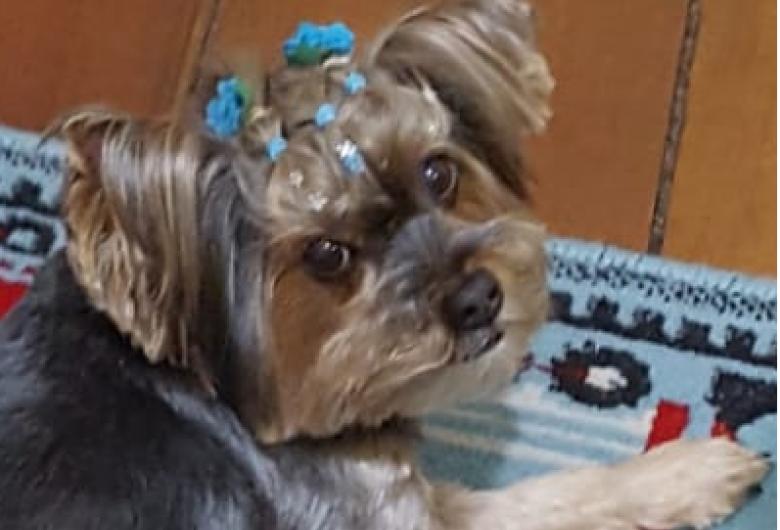 Homenagem a cachorrinha Leona e Dytinha