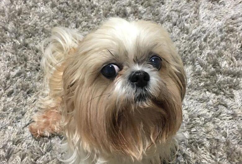 Homenagem da Funerais Pet a cachorrinha Lisboa