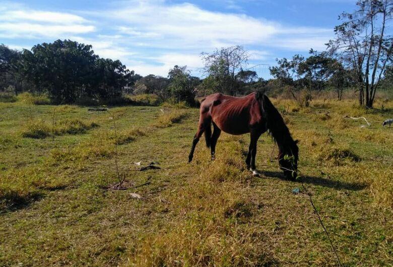 Secretaria de Serviços Públicos solicita retirada de animais de área de recuperação ambiental