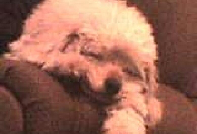 Homenagem da Funerais Pet ao cachorro Bob