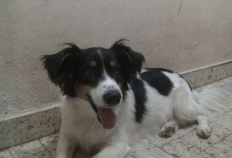 Homenagem do Funerais Pet ao cachorro Zequinha