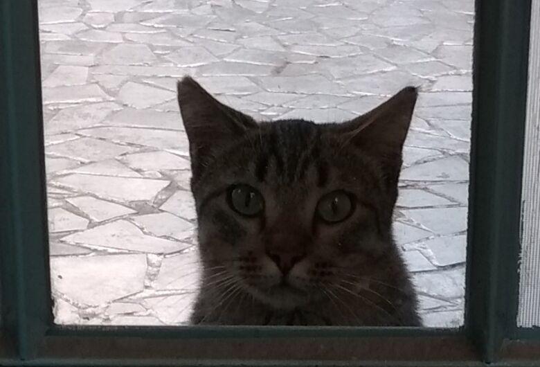 Homenagem da Funerais Pet a gatinha Sanfona