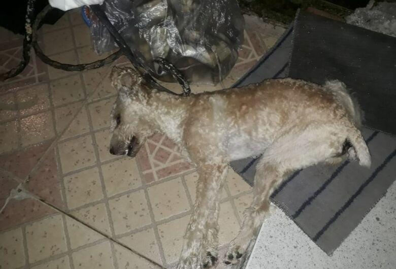 Final de semana é marcado pelo envenenamento de três cães em São Carlos