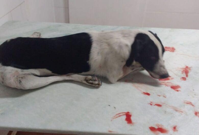 Cachorrinho morre após ser atropelado no Cidade Jardim