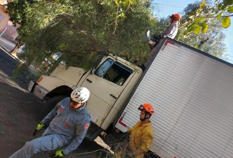 Árvore cai sobre caminhão no Centro