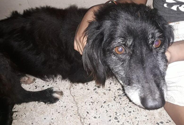 Mais um cachorrinho é vítima de envenenamento no Zavaglia