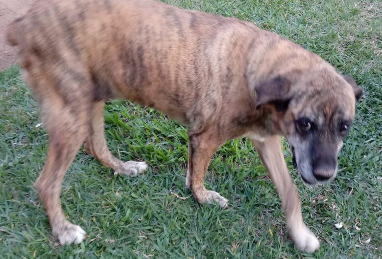 Homenagem Funerais Pet a cachorrinha Tika