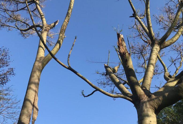 """Árvores estão sendo """"envenenadas"""" em São Carlos, acusam moradores"""