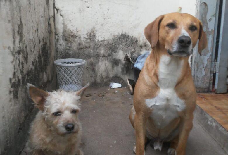 Faxineira tem luta diária para alimentar animais abandonados