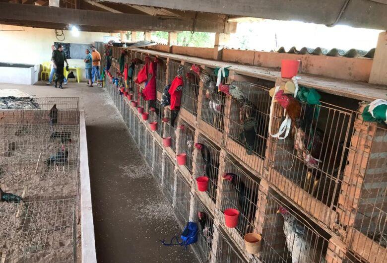 Operação Conjunta desmantela rinha de galos em Santa Rita do Passa Quatro