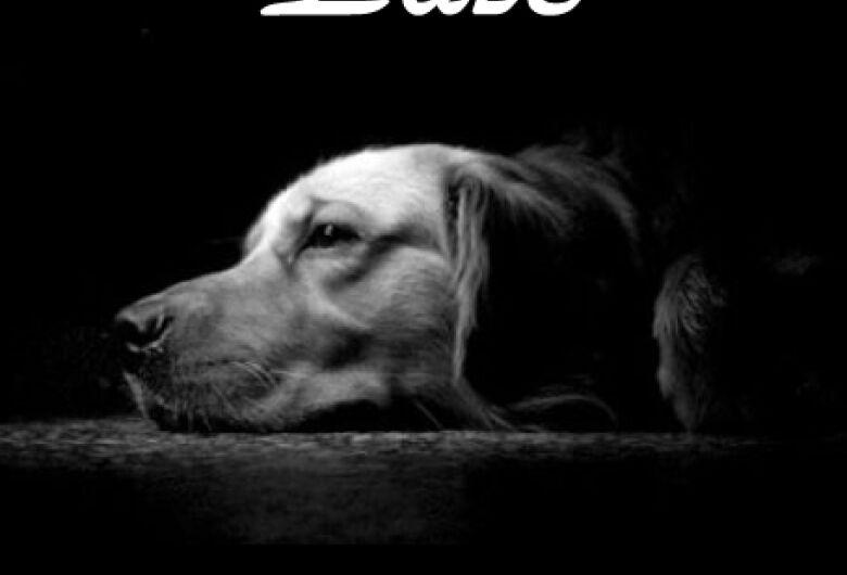 Homenagem Funerais Pet a cachorra Pantera