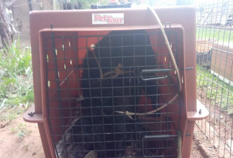 Cão que estava abandonado no CDHU é resgatado pelo Departamento de Defesa Animal