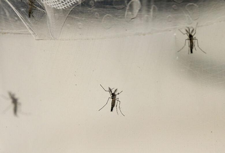 Exame sorológico para diagnóstico mais preciso do zika chega ao mercado