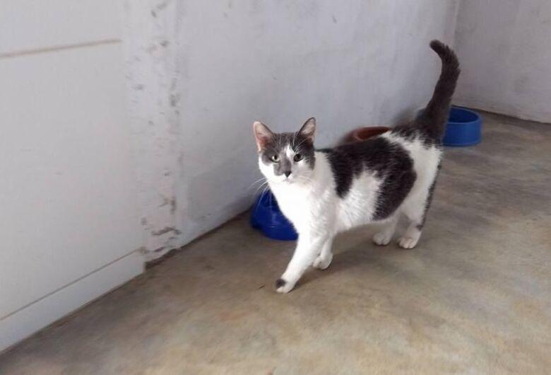 Homenagem da Funerais Pet a gatinha Margo