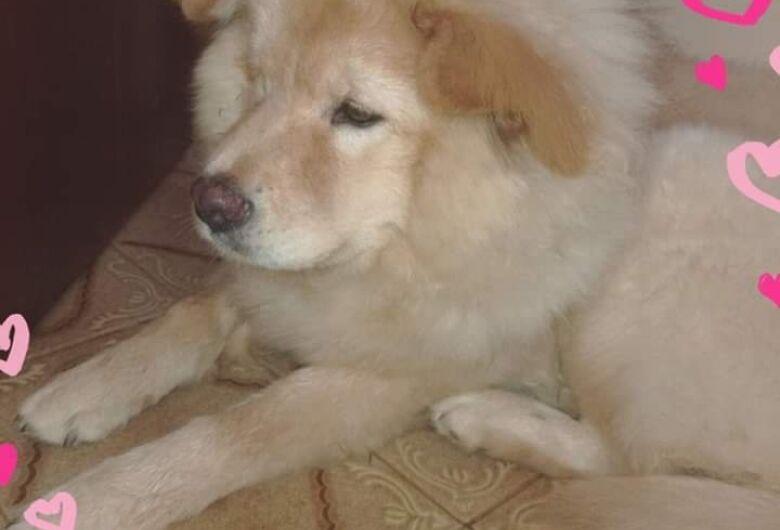 Homenagem da Funerais Pet a cachorrinha Cristal