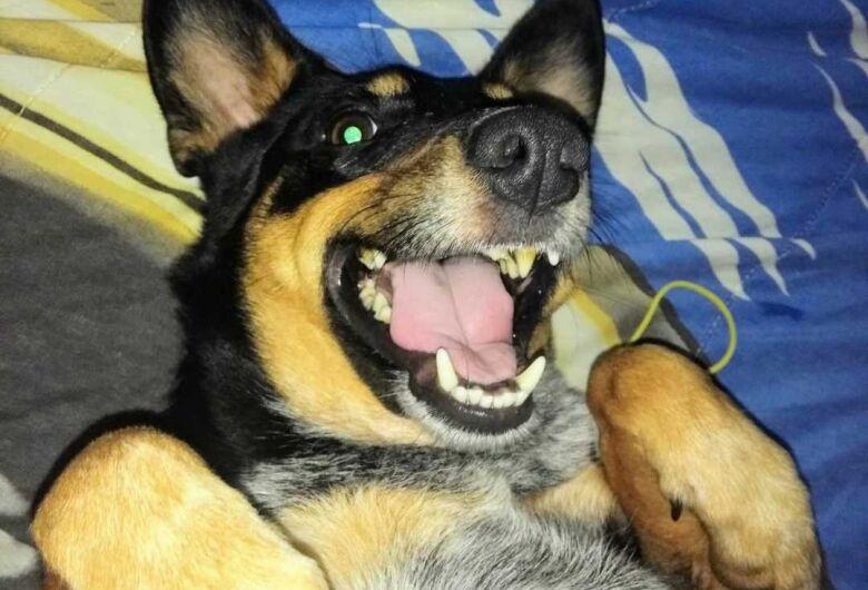 Homenagem Funerais Pet ao cachorrinho Nico