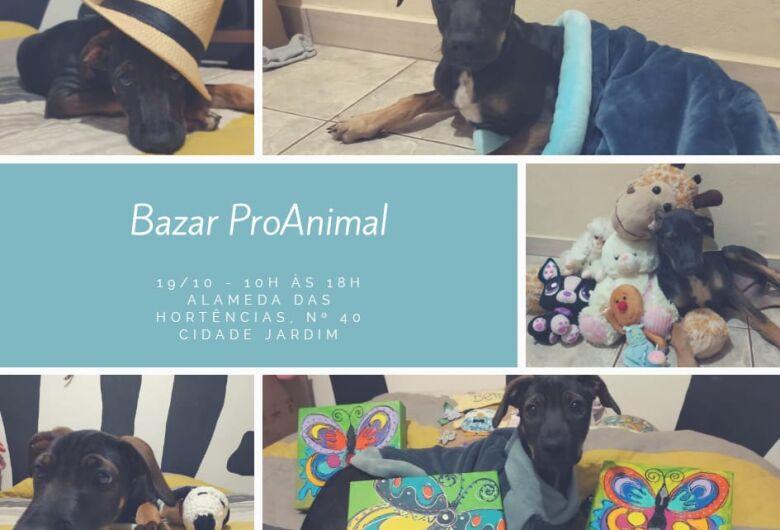 Bazar beneficente irá ajudar animais abandonados e vítimas de maus-tratos