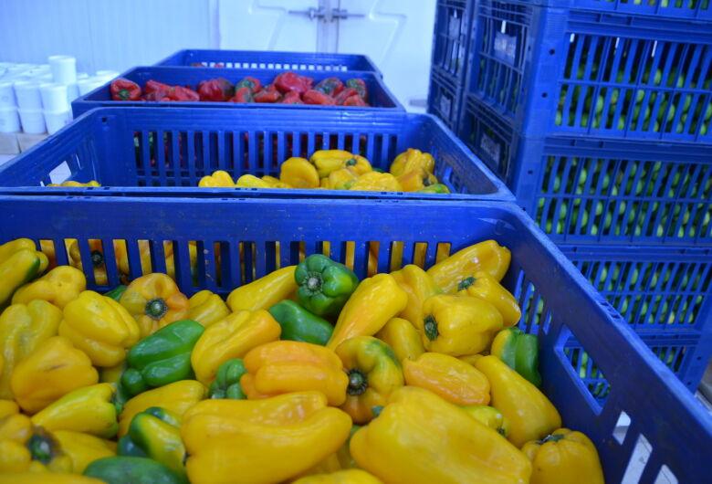 Secretaria de Agricultura retoma doação de alimentos para entidades assistenciais da cidade