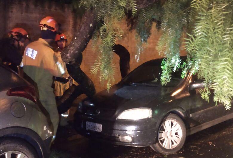 Chuva derruba árvores em cima de veículo