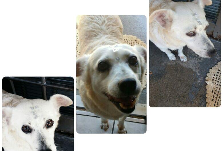 Homenagem da Funerais Pet a cachorrinha Princesa