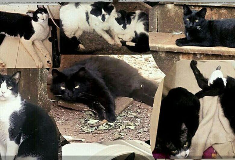 Ação social fará com que tampinhas virem ração para gatos em São Carlos